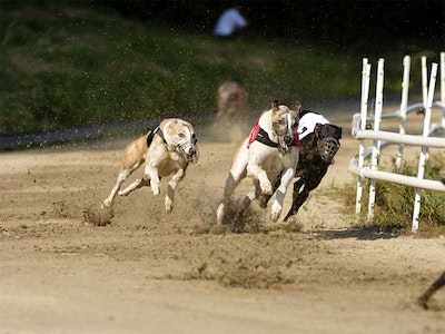 Saturday Night At The Dogs in Nottingham