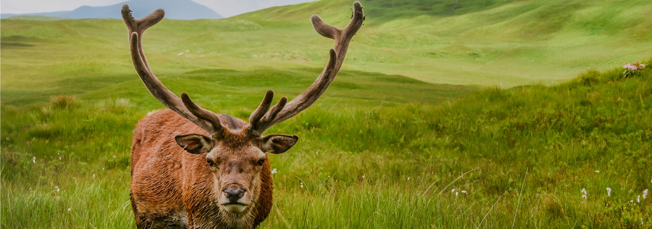 Where Does The Term Stag Do Come From?